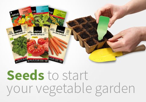 Seeds to start your vegetable garden