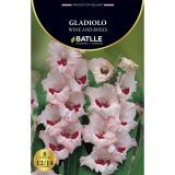 Bulbo Gladiolo Wine and Roses, 8 ud