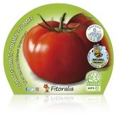 Plantón ecológico de   Tomate Tres Cantos Pack 6 ud. 54x43mm