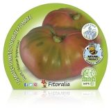 Plantón ecológico de Tomate Rosa Pack 6 ud. 54x43mm