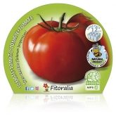 Plantón ecológico de Tomate Tres Cantos Pack 12 ud. 34x32mm