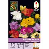 Bolbo cores Freesia Duplo Mix 10UD