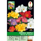 Bulbo Freesia Simple Mezcla de colores 10ud