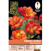 Bulbe de freesia double rouge-orange 10 pièces