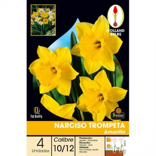 Bolbo Narciso tromp. Amarelo, 4 ud