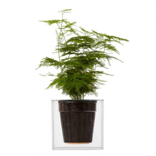 Grand pot de fleurs transparent Bosckke CUBE