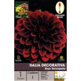 Bulbe de dahlia décoratif rouge velours 1 pc