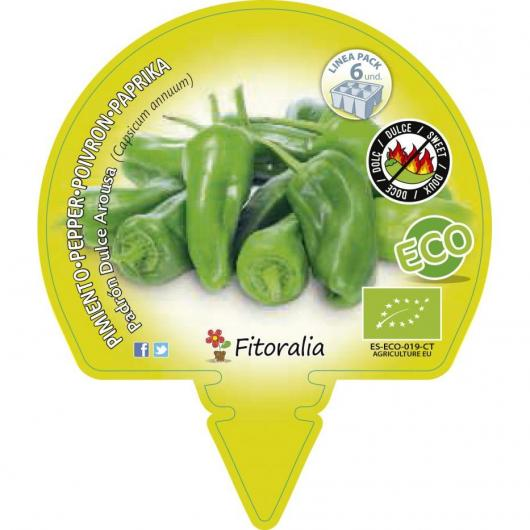 Plantón ecológico Pimiento padrón dulce Pack 6 ud. 54x43mm