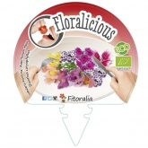 Plantón ecológico Flores comestibles I Pack 6 ud. 54x43mm