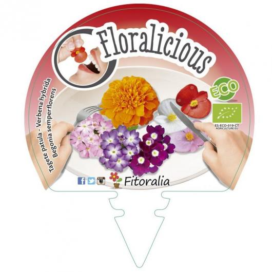 Plantón ecológico Flores comestibles II Pack 6 ud. 54x43mm