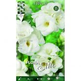 Bulbe Freesia double blanche Elite 10 unités