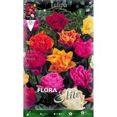Bulbo Tulipán doble varios colores Elite 10 ud
