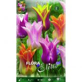 Bulbo Tulipán flor de lis mix colores Elite 10 ud