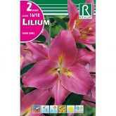 Bulbo Lilium asiatic rosa 2 uds